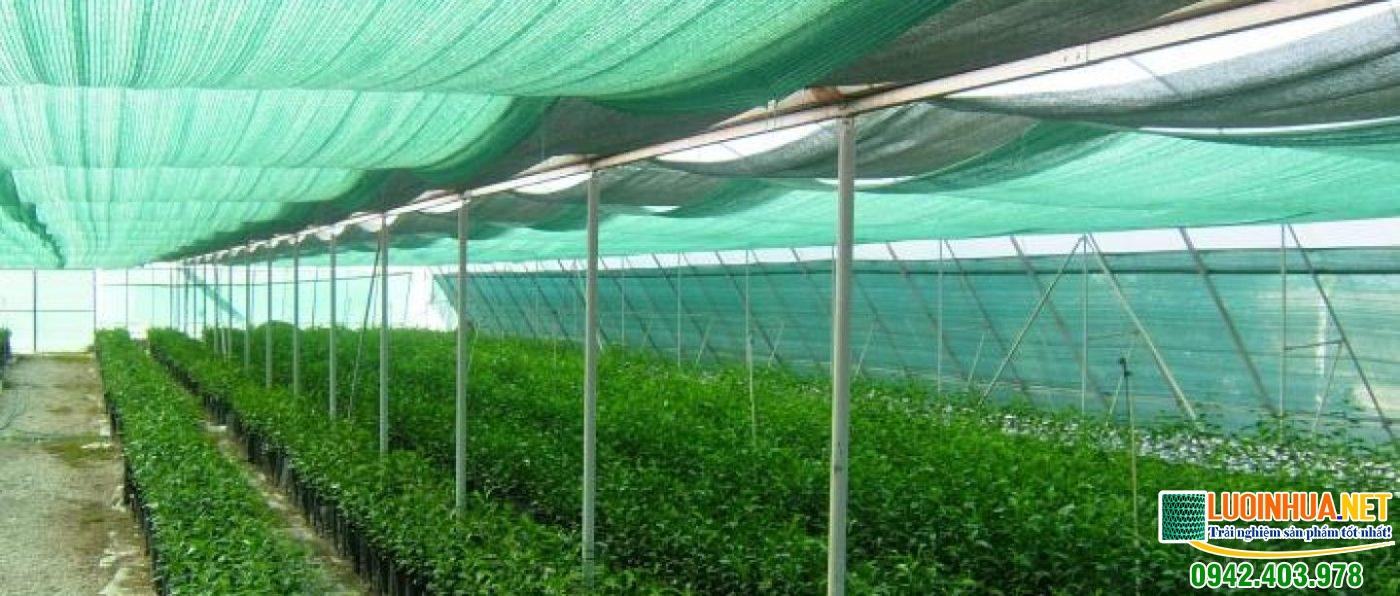 Cung cấp lưới che nắng trồng rau cho chị Thu tại Tứ Kỳ Hải Dương