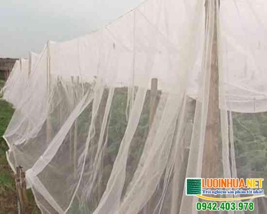 Cung cấp lưới nông nghiệp cho chị Minh ở Lai Châu