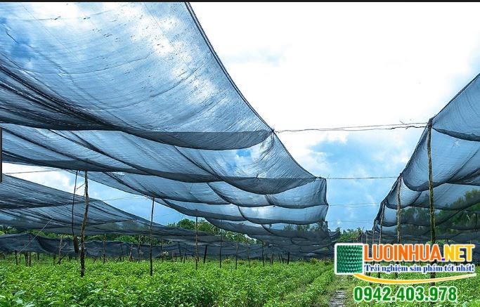 Lưới che nắng dùng trong trường hợp nào